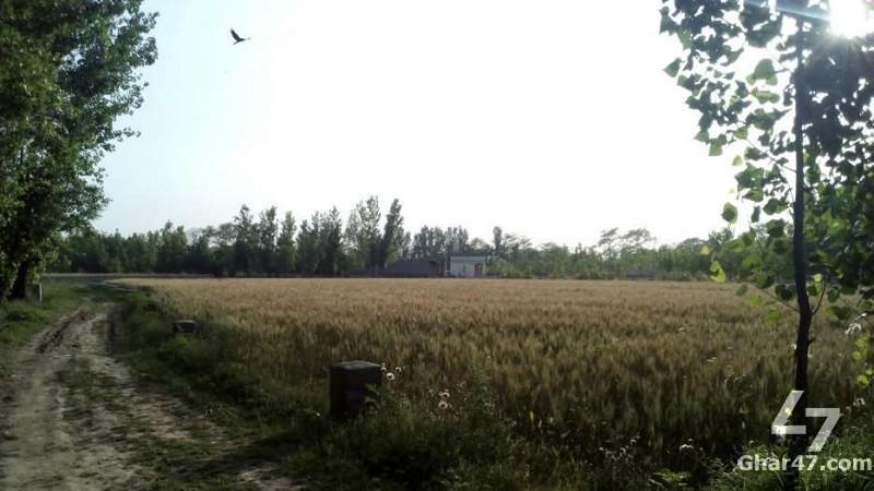 4 KANAL Plot, G.T. Road Near Takhta Bhai Mardan
