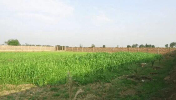 Bedian Road