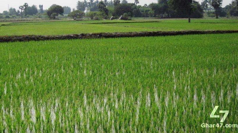 AGRICULTURAL Land, Near Ratodera Larkana