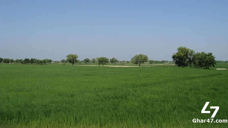 35 ACRE Farmhouse Is Available For Sale