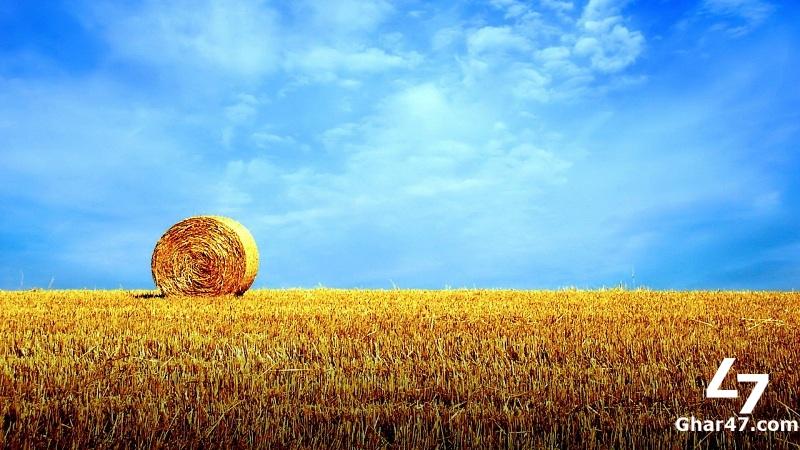 Bahawalnagar Agriculture Land
