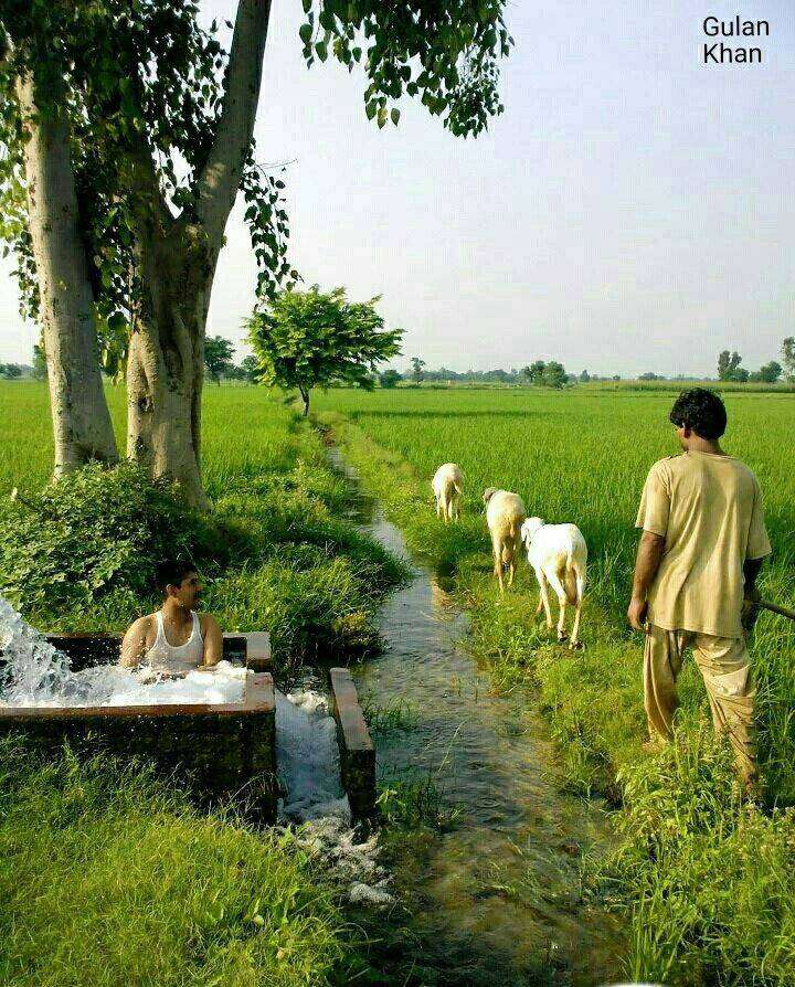 40 Kanal Agricultural Land For Sale in Layyah